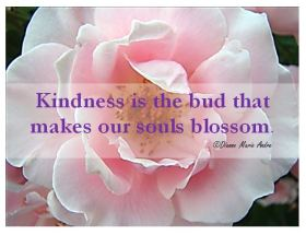 nov kindness