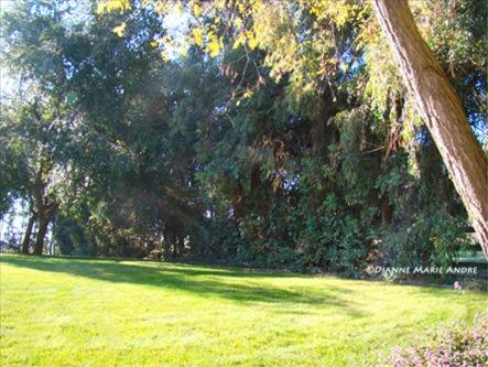backyard trees_edited-1